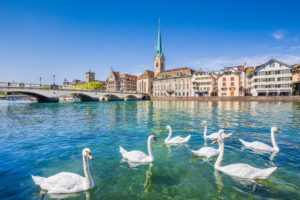 Zürich city center with swans on Limmat river, Switzerland